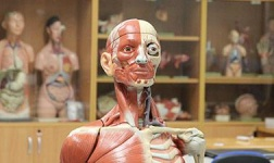 NYU Online Courses Human Anatomy for New York University Students in New York, NY