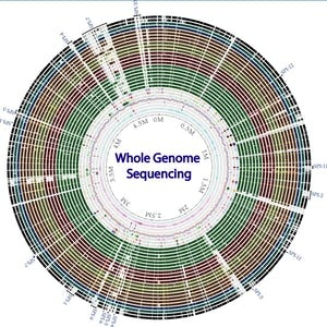 University of Washington Online Courses Whole genome sequencing of bacterial genomes - tools and applications for University of Washington Students in Seattle, WA